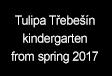 Tulipa Třebešín